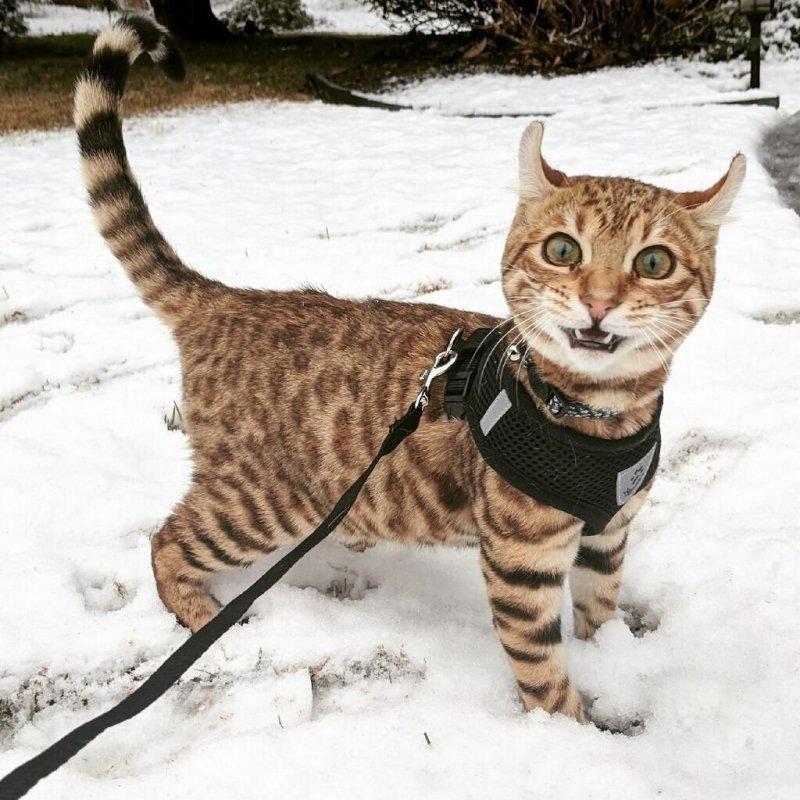 Реакция на снег день, животные, кадр, люди, мир, снимок, фото, фотоподборка