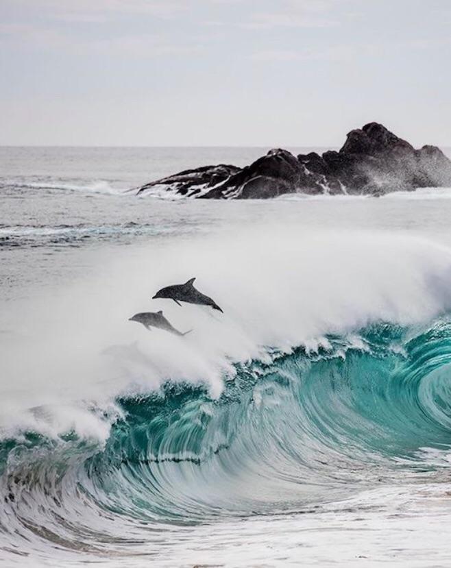Дельфины над волной день, животные, кадр, люди, мир, снимок, фото, фотоподборка