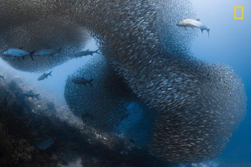 Победители конкурса фотографий дикой природы National Geographic National Geographic Nature, national geograhic, победители, победители конкурса, фотоконкурс, фотоконкурсы, фотоконкурсы. природа