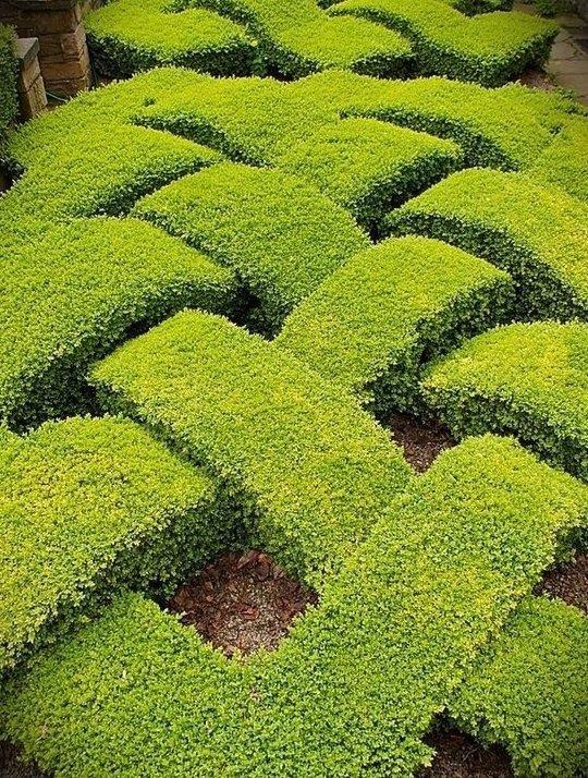 Топиар - сумасшедшее искусство из кустов Фабрика идей, искусство, красота, кустарник, сад, топиар, удивительно, фигуры