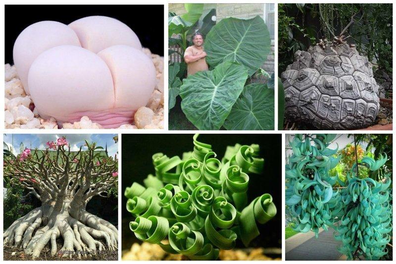 Потрясающие растения нашей планеты интересное, красиво, природа, растения, удивительно, факты