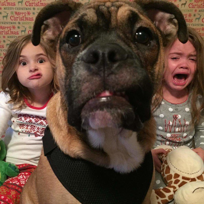 Рисунки дети и собаки смешное