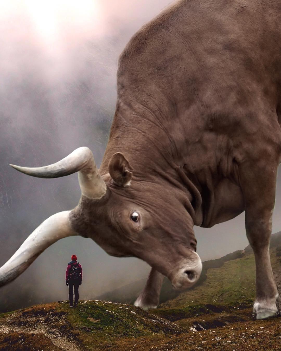 картинка самого большого животного камера здесь самая