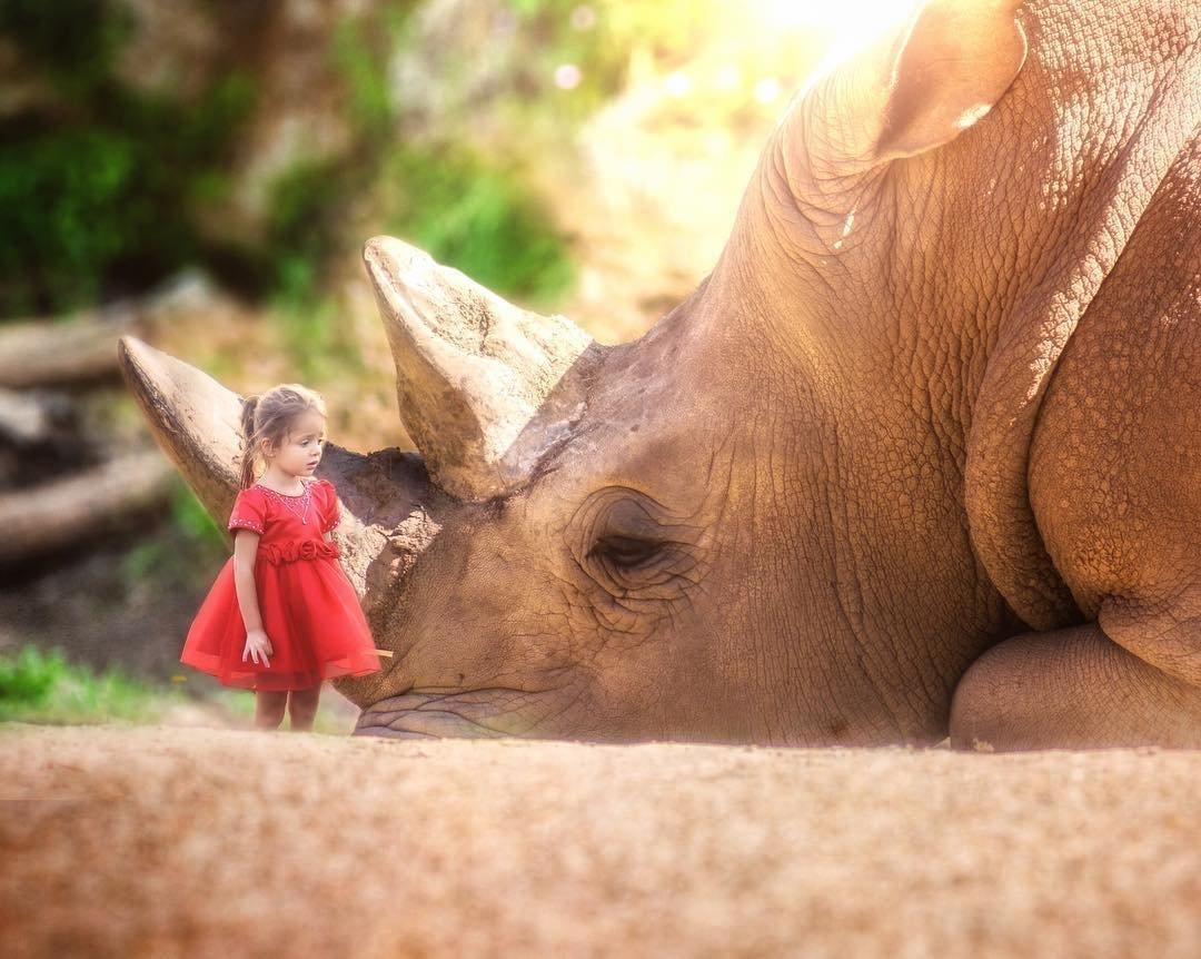 вашим картинки большие животные маленькие люди в мире самых