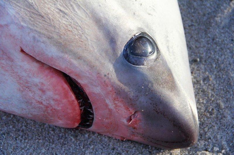 В США уже начали замерзать акулы ynews, аномалия, мороз, новости, погода, сша