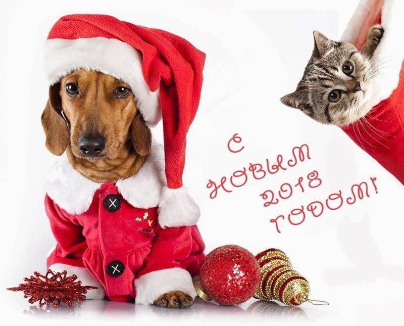 Старушки картинки, поздравления с картинками с новым годом 2018 собаки