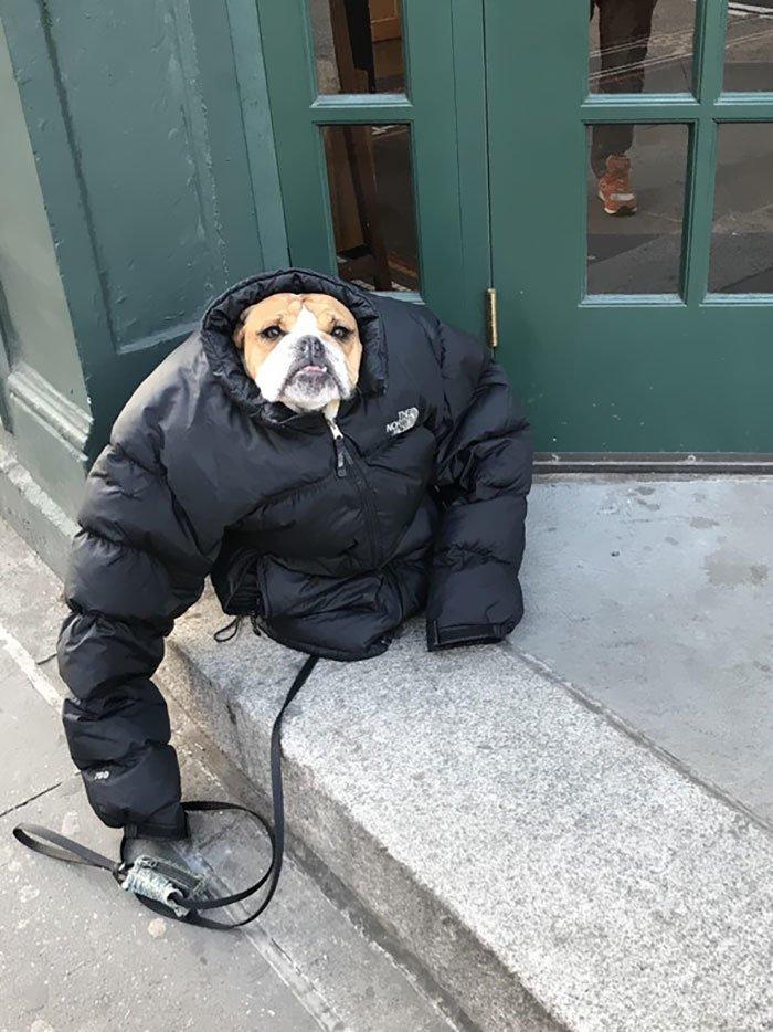 3. Даже собаки утеплились канада, мороз, погода, сша, фото, холод, явление