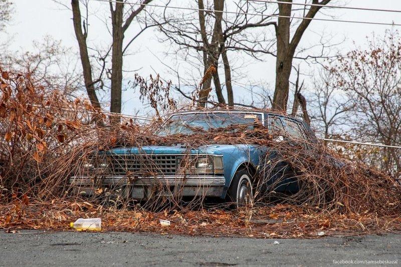 На обочине дороги. америка, нью-йорк, олдтаймер, ретро авто, ретро автомобили, сша, фото, фотографии