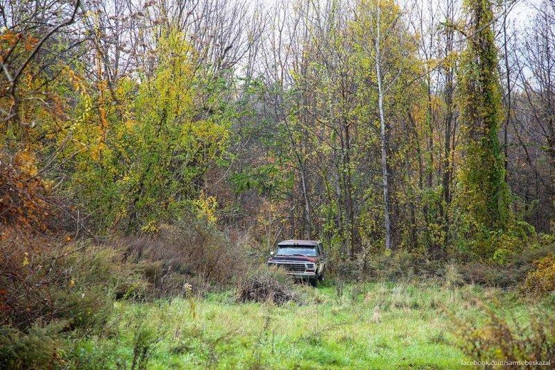 В лесу. америка, нью-йорк, олдтаймер, ретро авто, ретро автомобили, сша, фото, фотографии