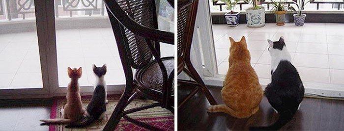Растущие вместе: до и после животные, интересное, фотографии