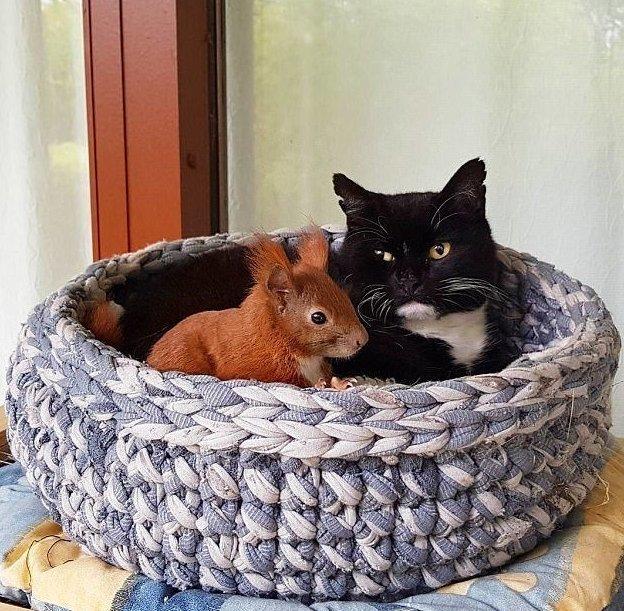История началась с того, что месячный бельчонок упал с высокого дерева в саду Декана Андерсена белка, дания, дружба, животные, история, кот, мир