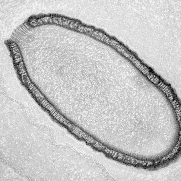 Гигантский вирус Мамонты, интересное, мумии, находки, палеонтология, подо льдом, фото