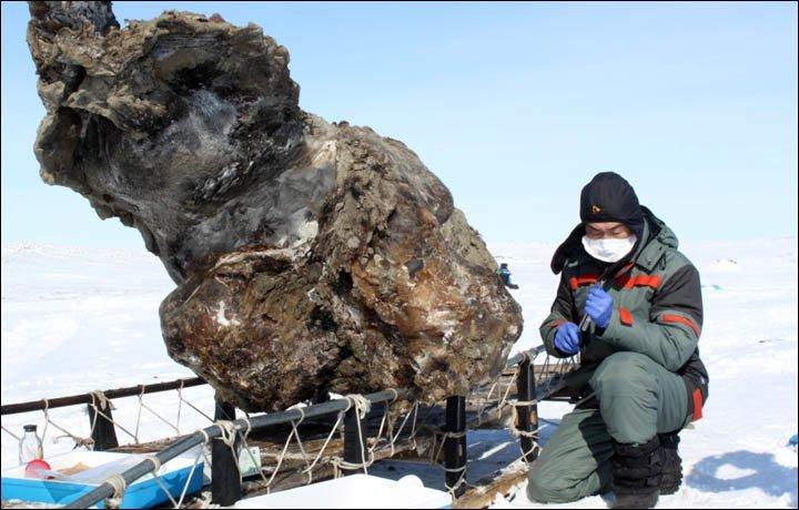 Замерзший Мамонт Мамонты, интересное, мумии, находки, палеонтология, подо льдом, фото