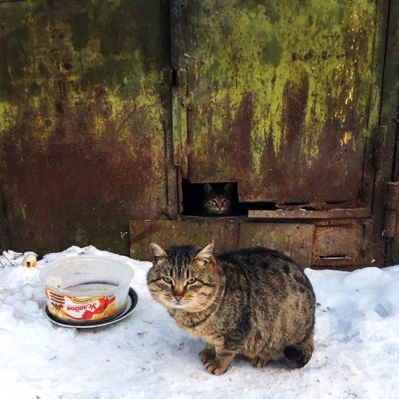 Очень колоритные уличные коты город, домашние животные, кот, кошка, эстетика