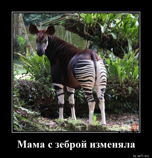 Мама с зеброй изменяла демотиватор, демотиваторы, жизненно, картинки, подборка, прикол, смех, юмор