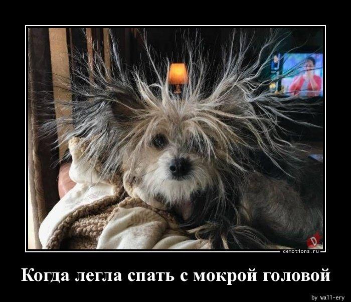 Когда легла спать с мокрой головой демотиватор, демотиваторы, жизненно, картинки, подборка, прикол, смех, юмор