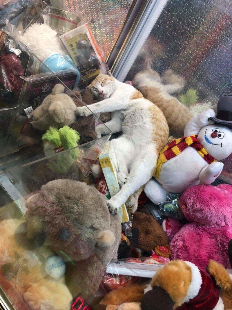 Кот в автомате день, животные, кадр, люди, мир, снимок, фото, фотоподборка