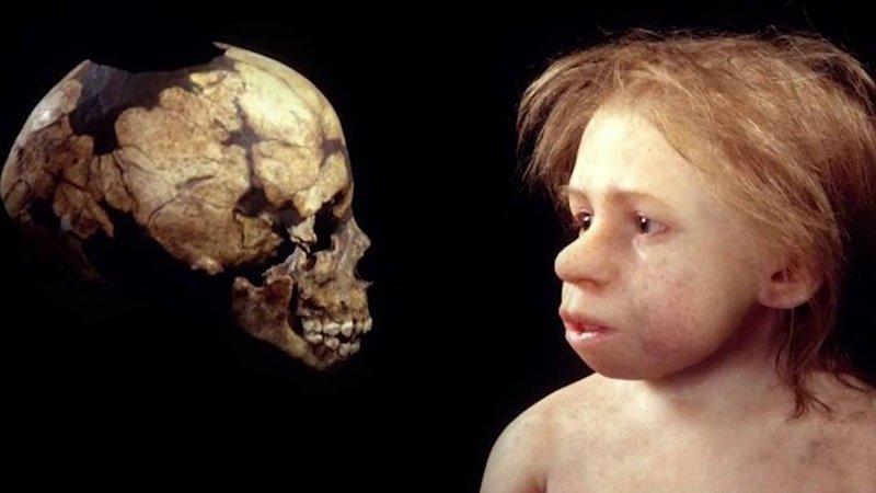 Неандертальский ребенок, по меньшей мере 30.000 до н.э. антропологическая реконструкция, восстановление, люди прошлого, наука, черепа