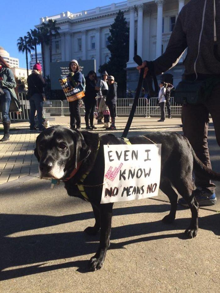 """""""Даже я знаю: """"нет"""" значит """"нет"""" ynews, вашингтон, женский марш, наглядная агитация, новости, нью-йорк, оригинально, сша"""