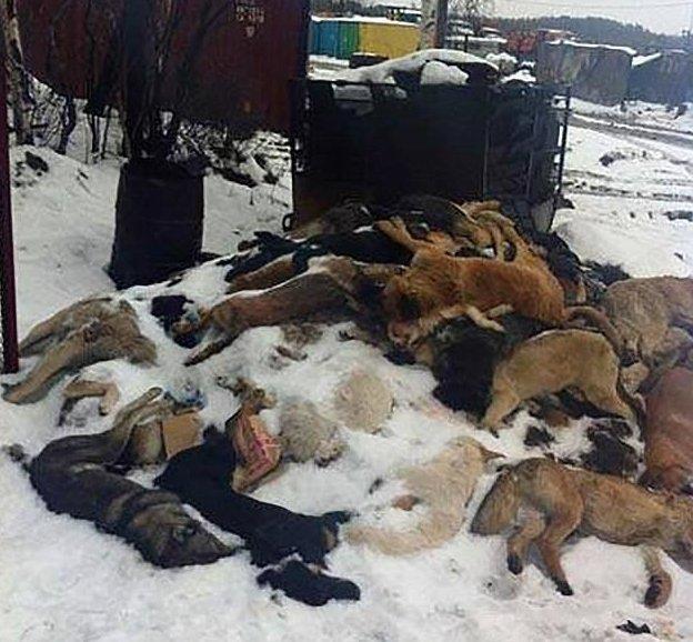 Проект по отлову животных был запущен еще при Виталии Мутко, когда Россия готовилась к Олимпиаде в Сочи животные, отлов, петиция, россия, убийство, футбол, чм-2018