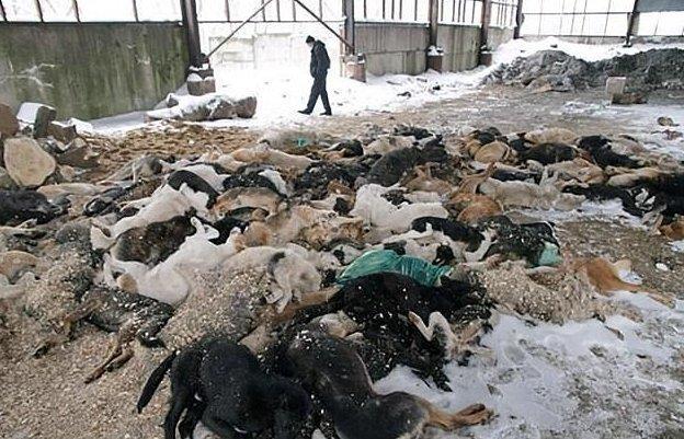 110 млн рублей было выделено на убийство бездомных животных животные, отлов, петиция, россия, убийство, футбол, чм-2018