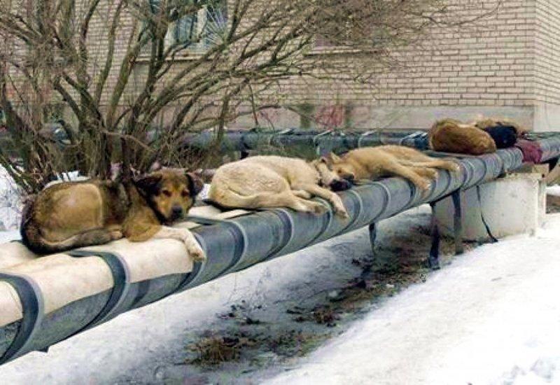 """В петиции зоозащитников говорится: """"Сотни тысяч собак, кошек и даже птиц будут отравлены, умерщвлены, убиты самыми жестокими методами. 11 городов России будут утоплены в крови бездомных животных."""" животные, отлов, петиция, россия, убийство, футбол, чм-2018"""