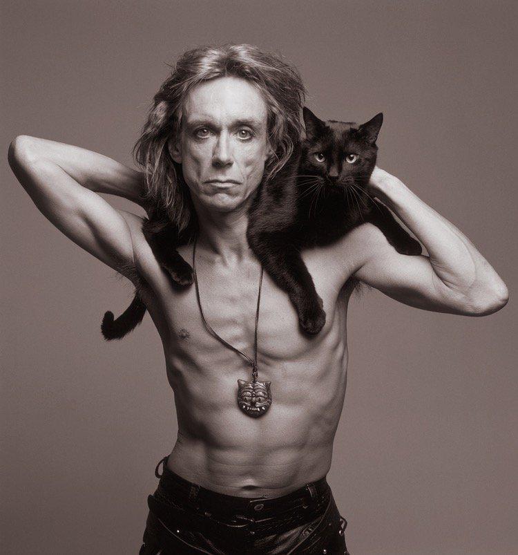 Игги Поп жизнь, коты, селебрити