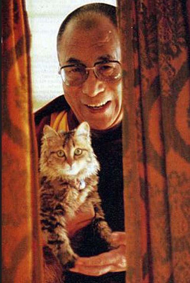 Далай-Лама жизнь, коты, селебрити