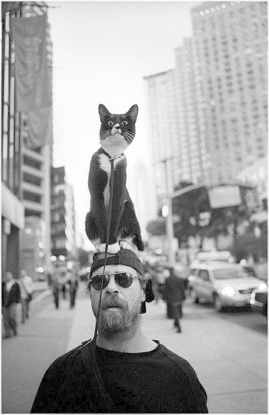 Всё! жизнь, коты, селебрити