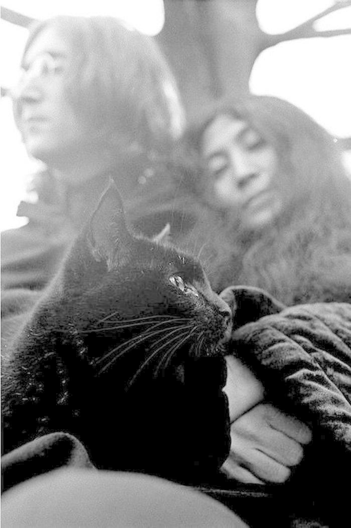 Джон Леннон и Йоко Оно жизнь, коты, селебрити
