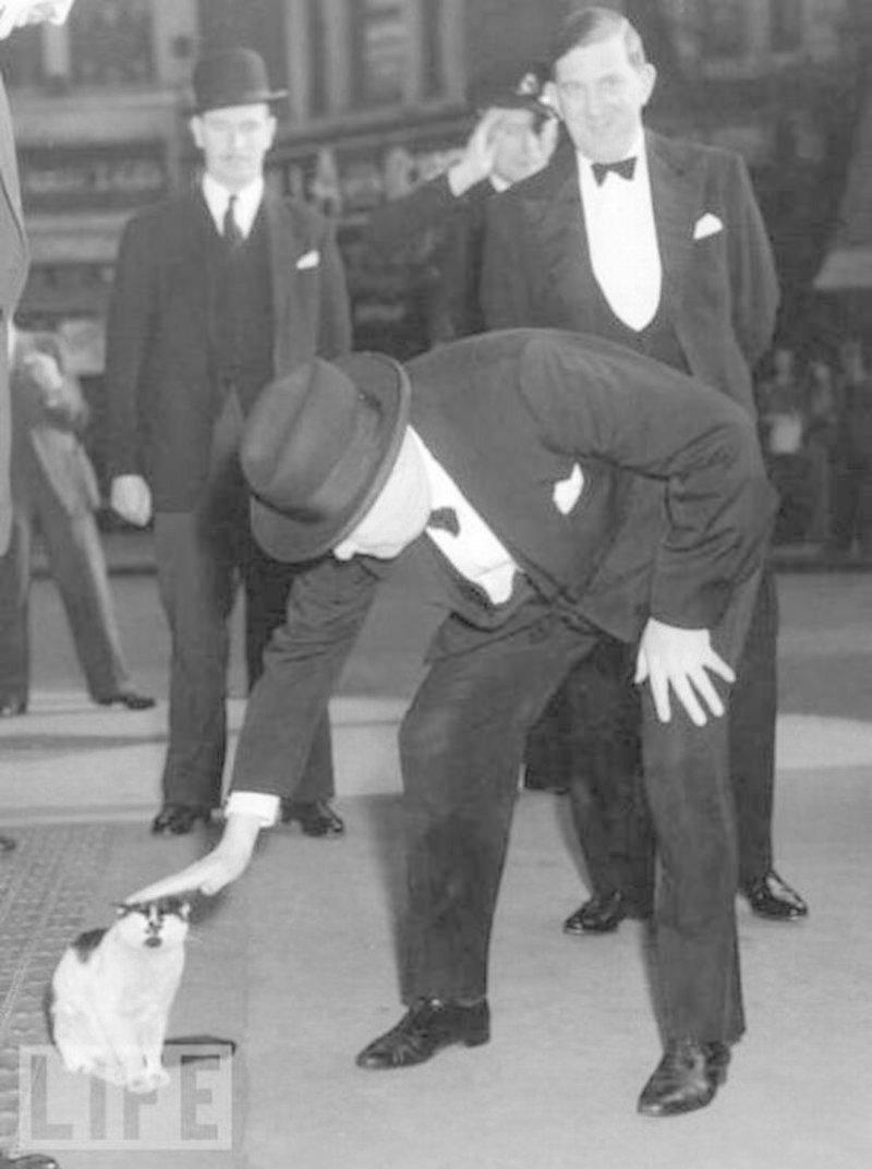 Уинстон Черчилль жизнь, коты, селебрити