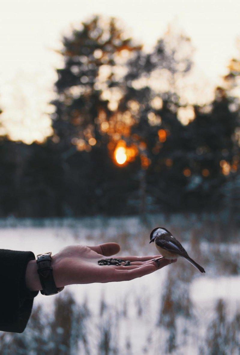 Фотоподборка за 24.01.2018 день, животные, кадр, люди, мир, снимок, фото, фотоподборка