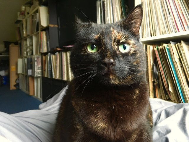 Трогательная история кошки, которая каждое утро приносит хозяину лист по необычной причине в мире, домашний питомец, животные, история, кошка, листок, милота