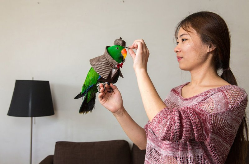 27-летняя Ян и ее нарядный попугай. Девушка уволилась из СМИ и основала свою компанию по изготовлению и продаже костюмов для попугаев, спрос на которые растет с каждым годом в мире, домашний питомец, животные, китай, питомцы, экзртика