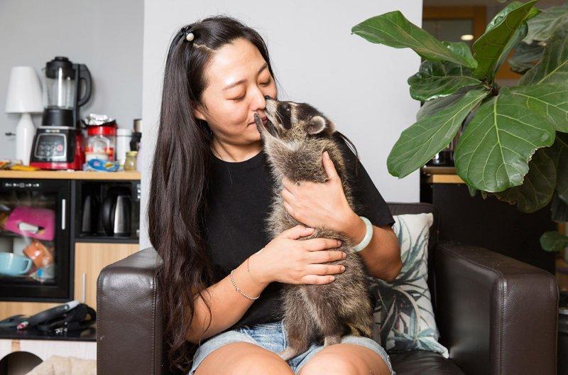 32-летняя Лу Тинтин — владелица успешного зоомагазина в центре Пекина. Здесь живет ее любимец — трехмесячный енот-полоскун из Северной Америки в мире, домашний питомец, животные, китай, питомцы, экзртика