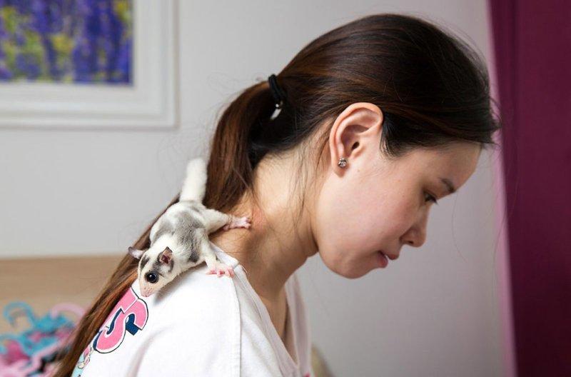 27-летняя Мао Юэин со своим питомцем — сахарной сумчатой летягой в мире, домашний питомец, животные, китай, питомцы, экзртика