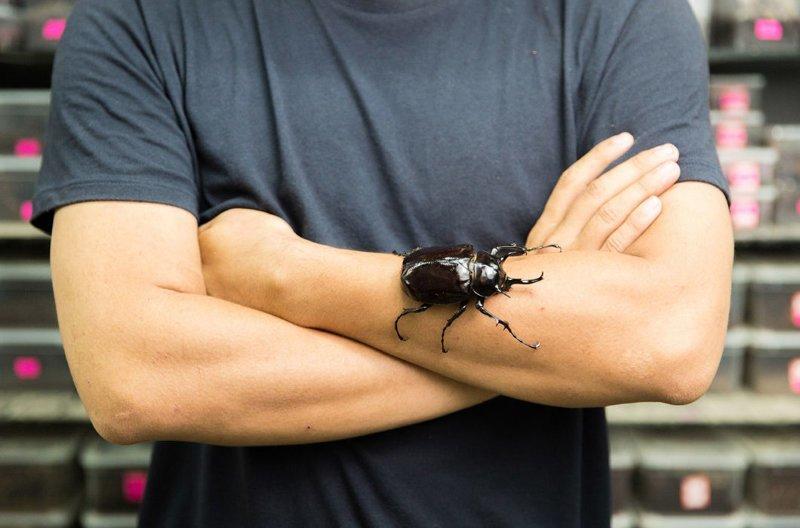 29-летний Ли Хуацзюнь с жуком Халькосома атлас — одним из крупнейших жуков в мире, получившем свое название в честь могучего титана из греческой мифологии. Этот вид встречается в Малайзии и Индонезии. Ли также собирает пауков — их у него около 200 в мире, домашний питомец, животные, китай, питомцы, экзртика