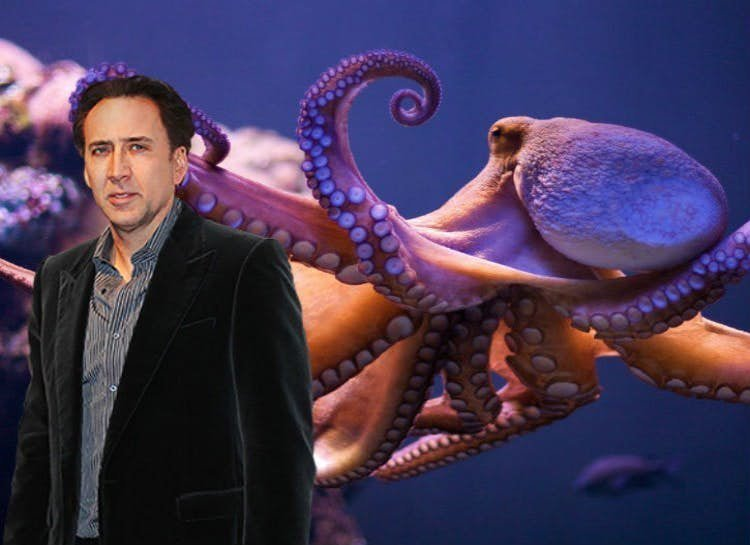 Николас Кейдж - осьминог домашние животные, домашние любимцы звезд, звезды, знаменитости, мое зверье, необычно, оригинально, питомцы