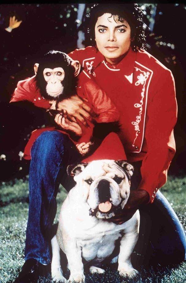 Майкл Джексон - шимпанзе домашние животные, домашние любимцы звезд, звезды, знаменитости, мое зверье, необычно, оригинально, питомцы