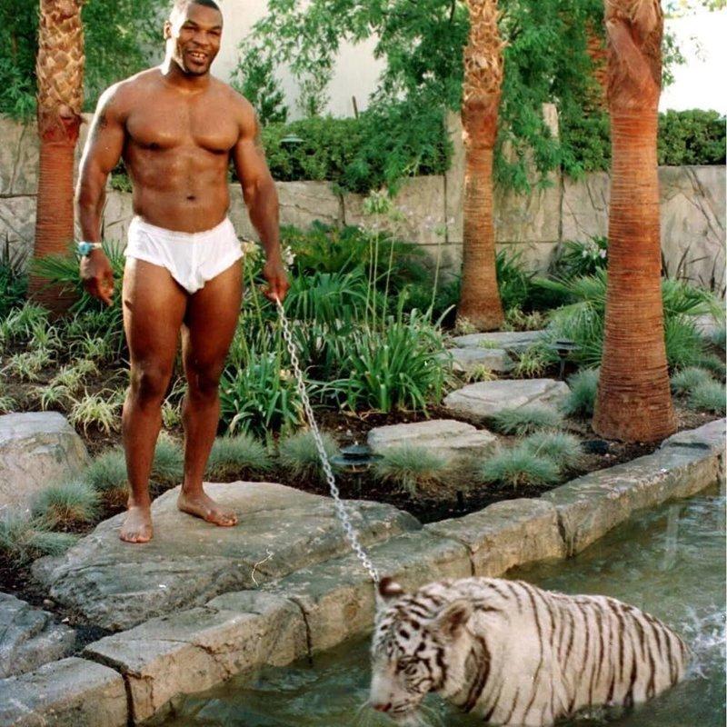 Майк Тайсон - бенгальские тигры домашние животные, домашние любимцы звезд, звезды, знаменитости, мое зверье, необычно, оригинально, питомцы