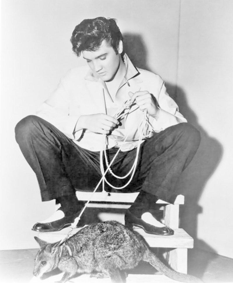 Элвис Пресли - кенгуру домашние животные, домашние любимцы звезд, звезды, знаменитости, мое зверье, необычно, оригинально, питомцы