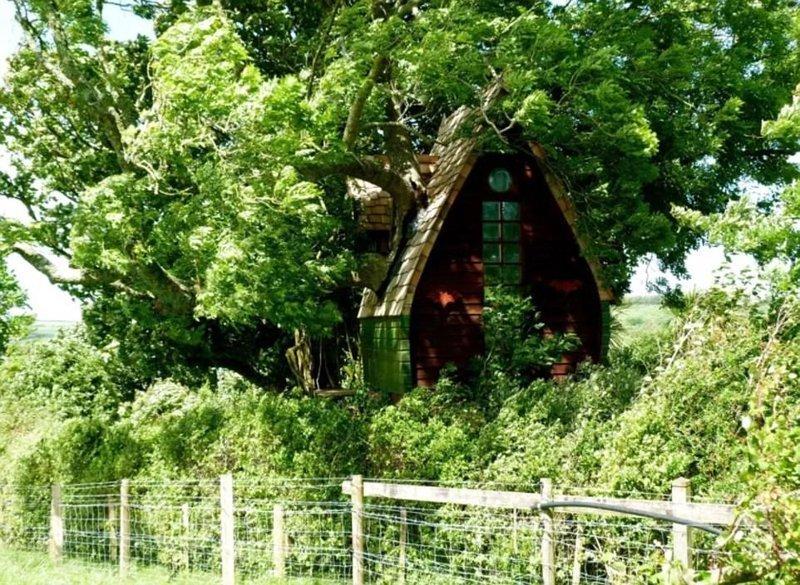 """Это своеобразный """"Домик на дереве"""". Или в дереве. В общем, неплохое место для единения с природой Airbnb, аренда, аренда жилья, великобритания, необычное жилье, необычные дома, путешествия, туризм"""