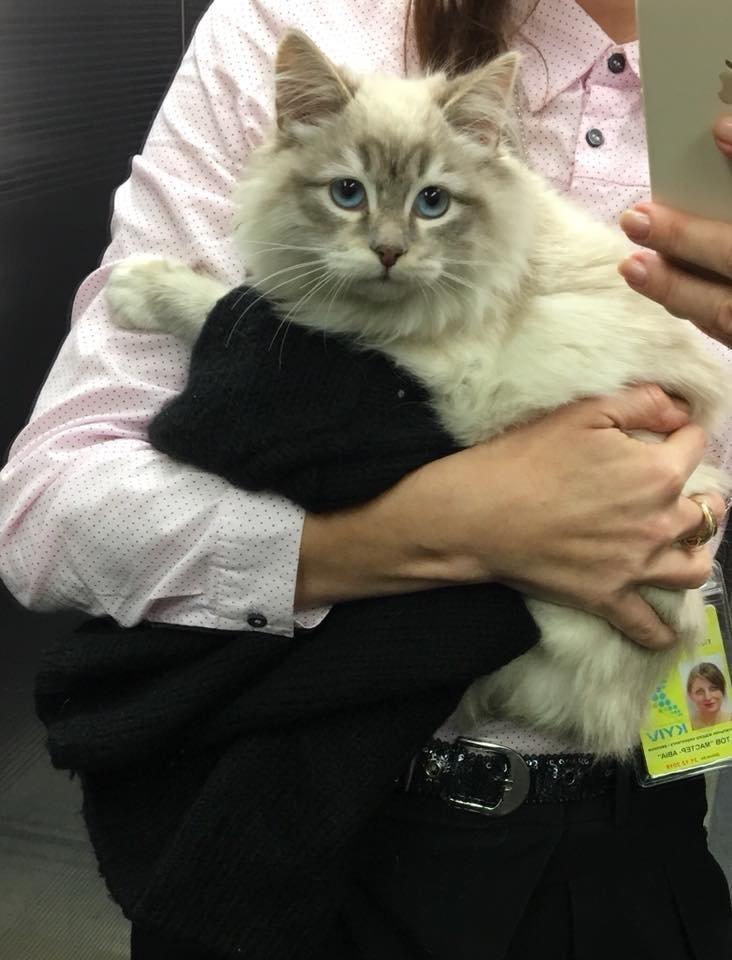 Девушка бросила в аэропорту котёнка, с которым её не пустили в самолёт история, кошки, новости