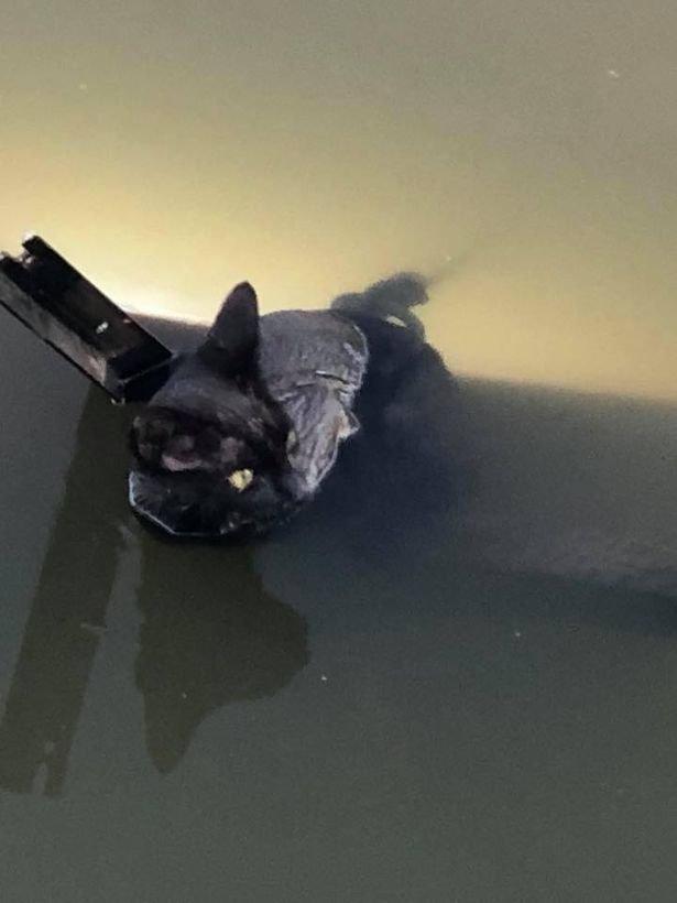 Девушка вытянула кота из реки и застыла в изумлении. К нему была привязана циркулярная пила! животные, котёнок, мерзавцы, река, спасение