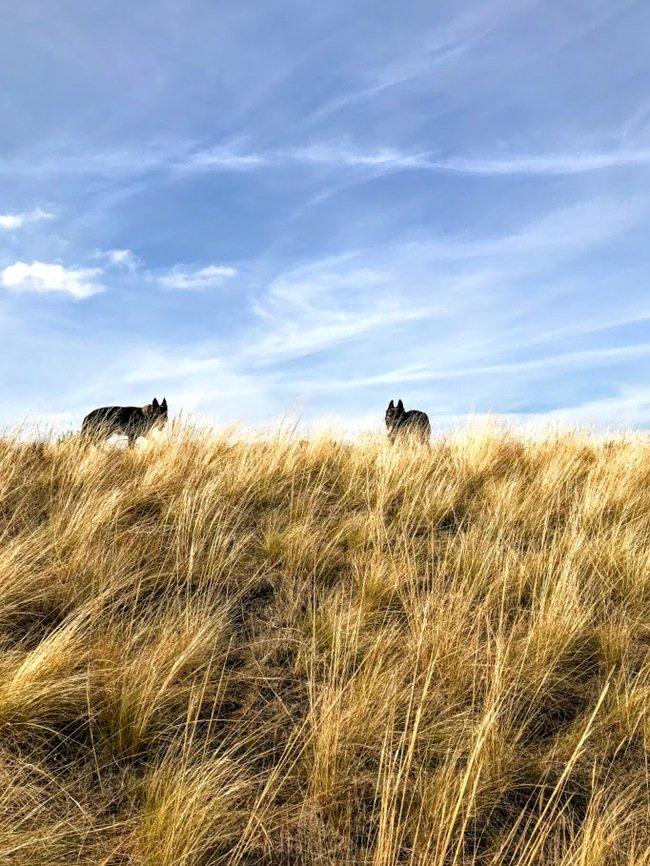 Прогулка день, животные, кадр, люди, мир, снимок, фото, фотоподборка