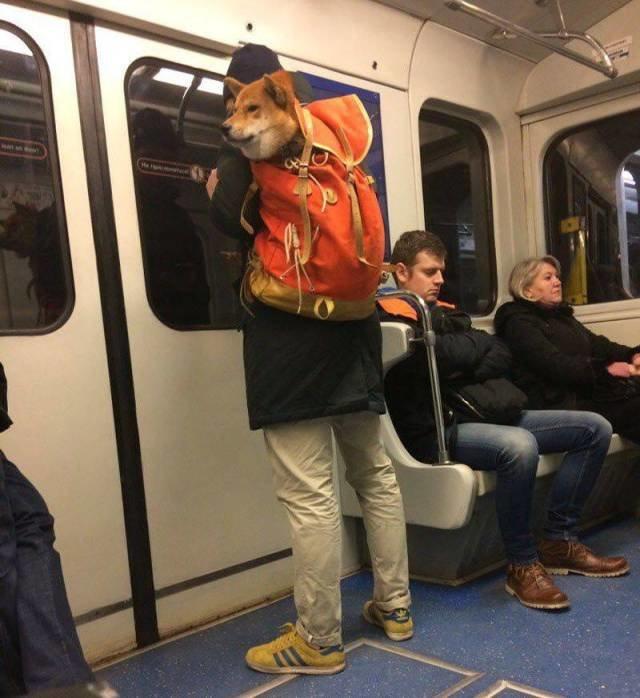 Перевозка собаки в метро день, животные, кадр, люди, мир, снимок, фото, фотоподборка