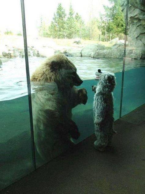 Знакомство с медвдем день, животные, кадр, люди, мир, снимок, фото, фотоподборка