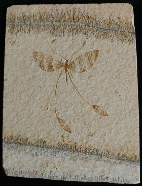 Бабочка юрского периода интересное, красота, наука, окаменелости, отпечатки, прошлое