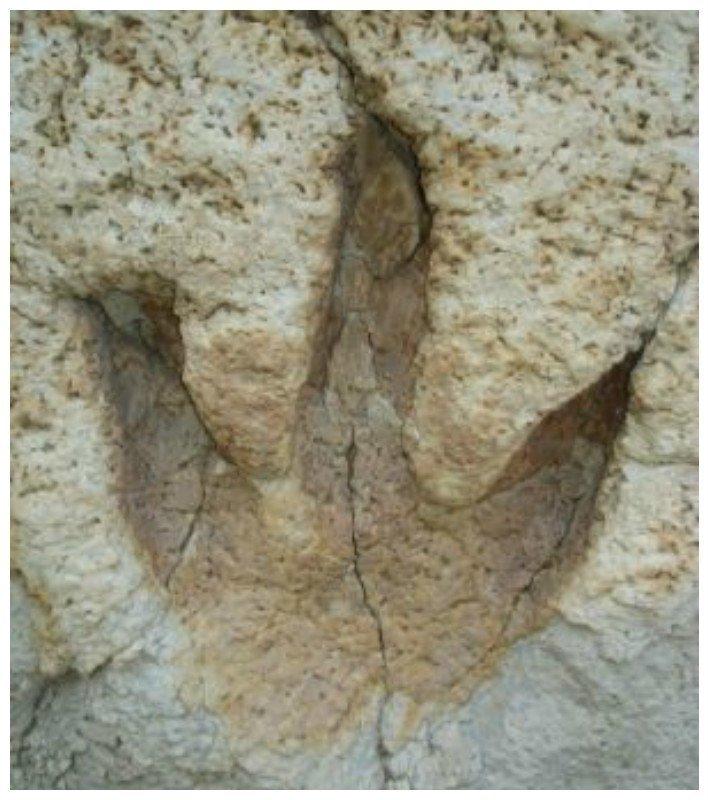 Фантастически красивые окаменелости из прошлого