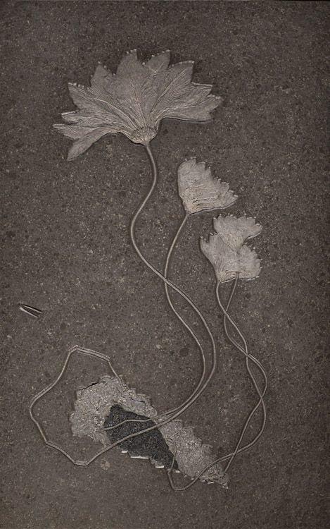 Ископаемая лилия интересное, красота, наука, окаменелости, отпечатки, прошлое